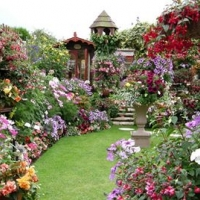 garden-chock-full-of-colors