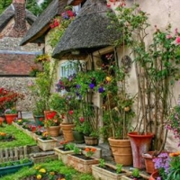 garden-of-potted-plants