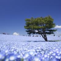 hitachi_seaside_park