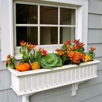 left-windowbox-window-box-fall-pumpkins-wm