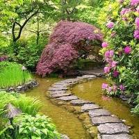 lovely-path-through-pond-destination-wisteria