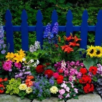 picket-fence-with-colorful-flowers