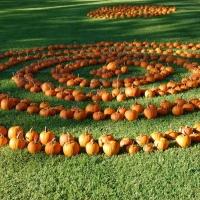 pumpkin-spiral
