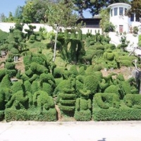topiary-yardscape