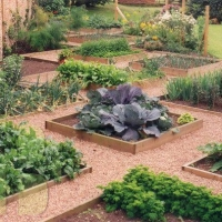 veggie-garden-path