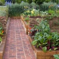 veggie-gardening-in-raised-beds
