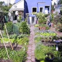 veggie-gardening-in-the-yard