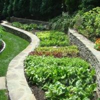 veggie-gardening