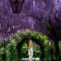 wisteria-arbors