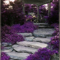 gorgeous-pathway-to-pergola