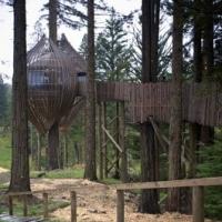 modern-treehouse