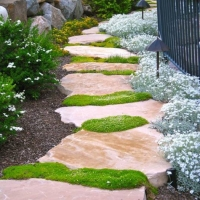 pathway-of-rock-and-moss