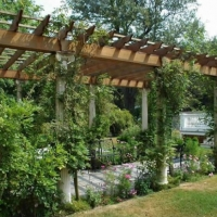 climbing-tree-vines-grape-wood-pergola-design