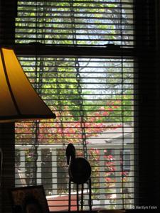 World through the Window